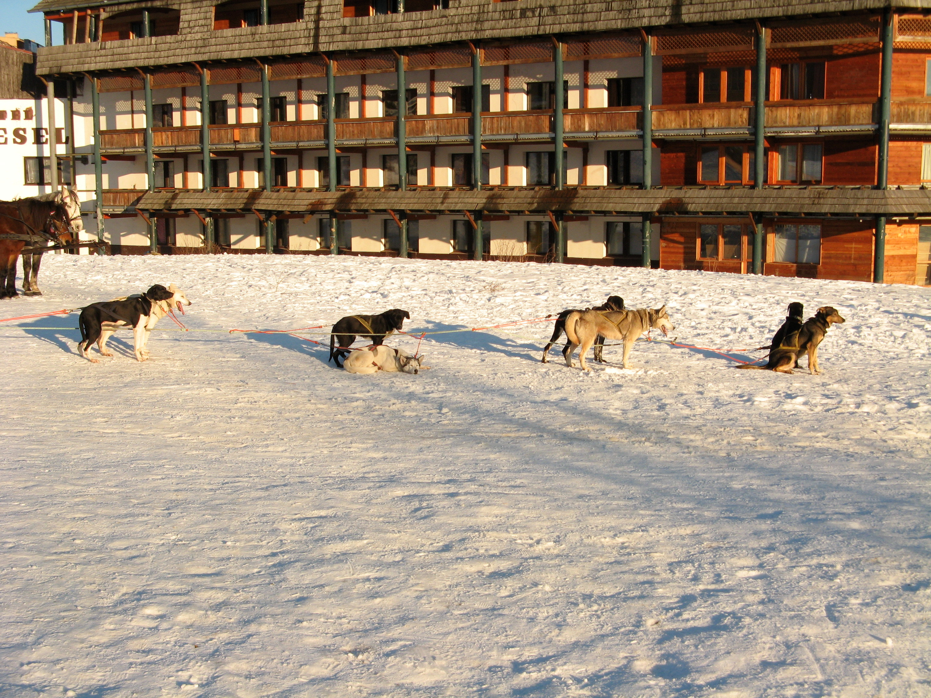 Mushing in front of the Vesel hotel ( 640x480 )