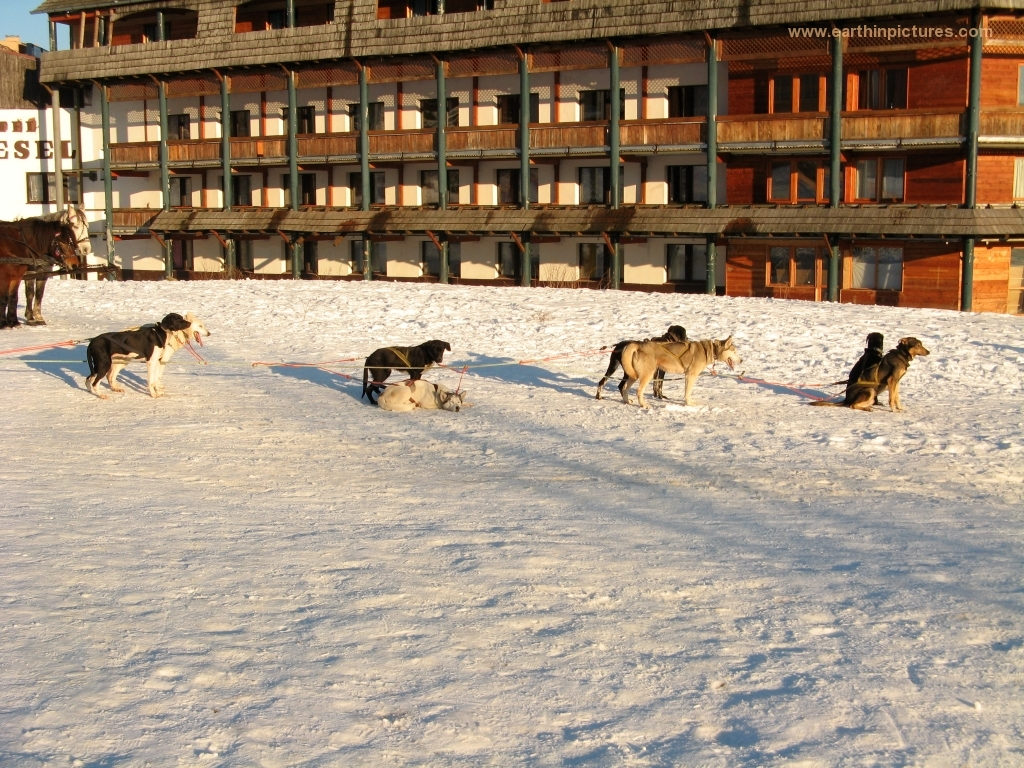 Mushing in front of the Vesel hotel ( 1024x768 )